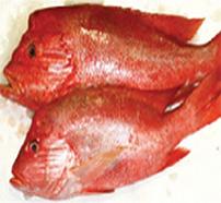 fresh fish - OCEANA FISHERIES CO.LTD